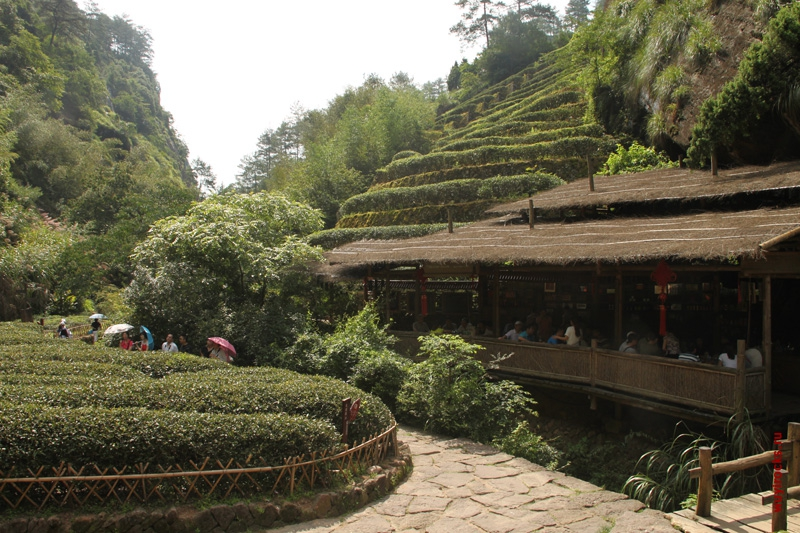 Дороже золота: самые редкие и изысканные виды чая