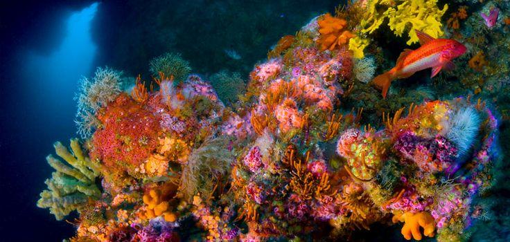 Острова Новой Зеландии: нетронутая природа, Южное сияние, поразительные вулканические колонны и подводные пещеры